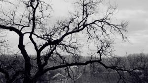 Wallpaper with Tree Branches 51+