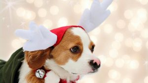 Christmas Puppy Wallpaper 48+