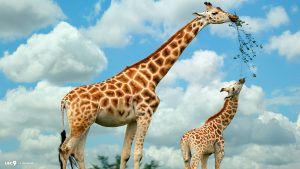 Giraffe Backgrounds 69+