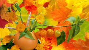 HD Fall Colours Wallpapers 48+