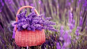 Lavender Background 43+