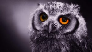 Owl Wallpaper Pictures 72+