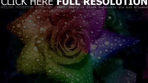 Rainbow Roses Wallpaper 48+