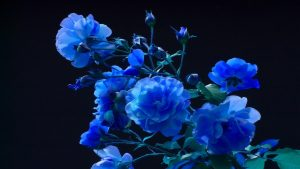 Blue Roses Background 48+
