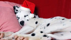 Christmas Puppies Wallpaper 48+