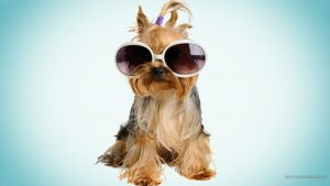 Cool Dogs Wallpapers 60+