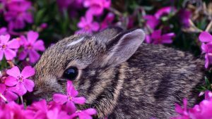 Easter Wallpaper with Cute Animals 51+