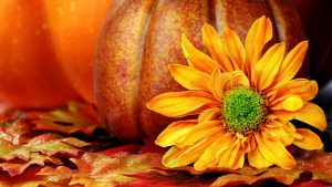 Fall Wallpapers With Pumpkins 57+