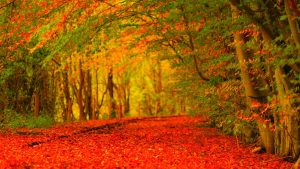 Autumn Screen Wallpaper 64+