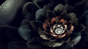 Black Roses Wallpaper 64+