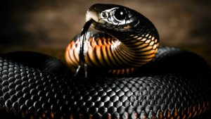 Black Snake Wallpaper 60+