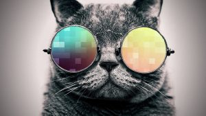 Cool Cat Wallpapers 71+