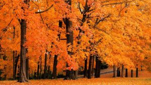 Fall Colors Wallpaper Background 57+