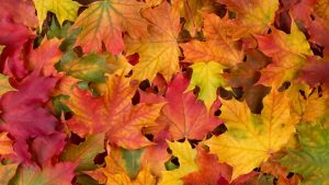 Fall Leaf Background 53+